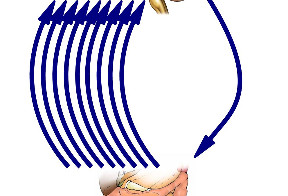 El Segundo Cerebro. Cuidar el intestino para sanar las emociones – Torrelavega