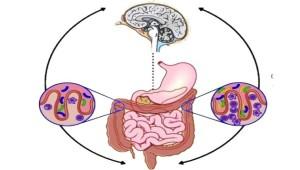 eje-intestino-cerebro-y-microbiota